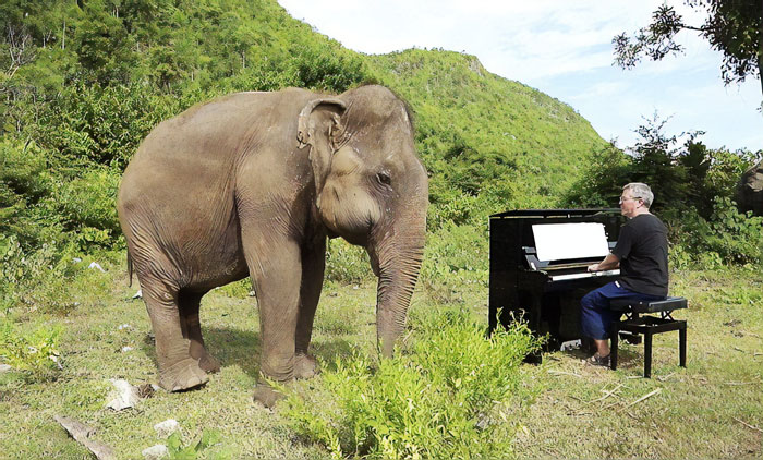 """Clair de Lune"" (Debussy) on piano for an 80 y.o. elephant – Paul Barton"