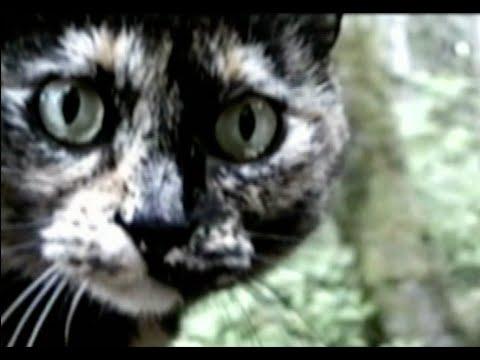 Meow (midi demo) –ESTRADASPHERE