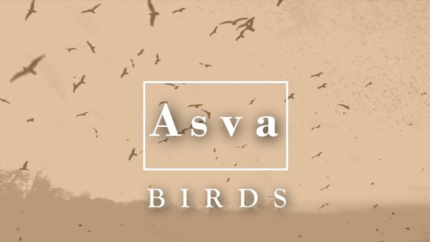 ASVA – Birds